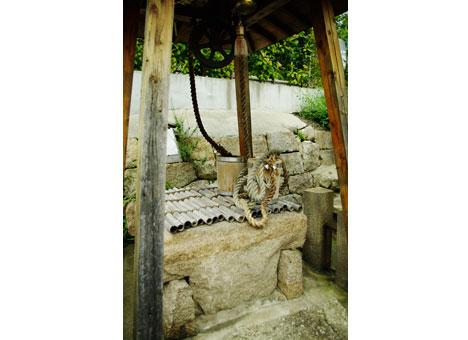 泰聖寺聖苑墓地